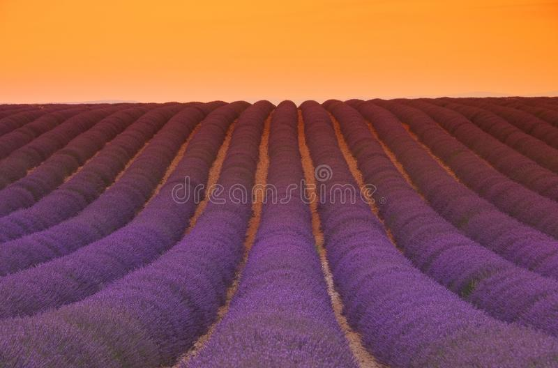 Lavendelfeldsonnenuntergang lizenzfreie stockfotos