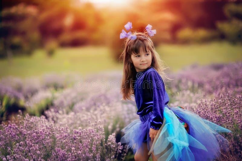 Lavendelgebied royalty-vrije stock afbeeldingen