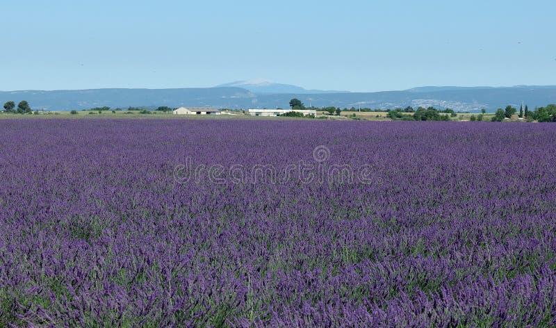 Lavendelgebied, de Provence, zuiden van Frankrijk royalty-vrije stock foto's
