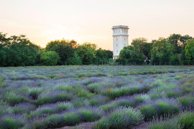 Lavendelgebied dichtbij het Esterhazy-kasteel, Fertod royalty-vrije stock afbeelding