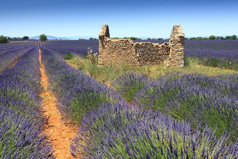 Lavendelgebied en ruïne stock afbeeldingen
