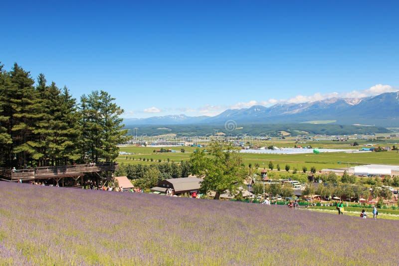 Lavendelgebied in Furano, Hokkaido met sommige toeristen die langs op de achtergrond lopen stock foto