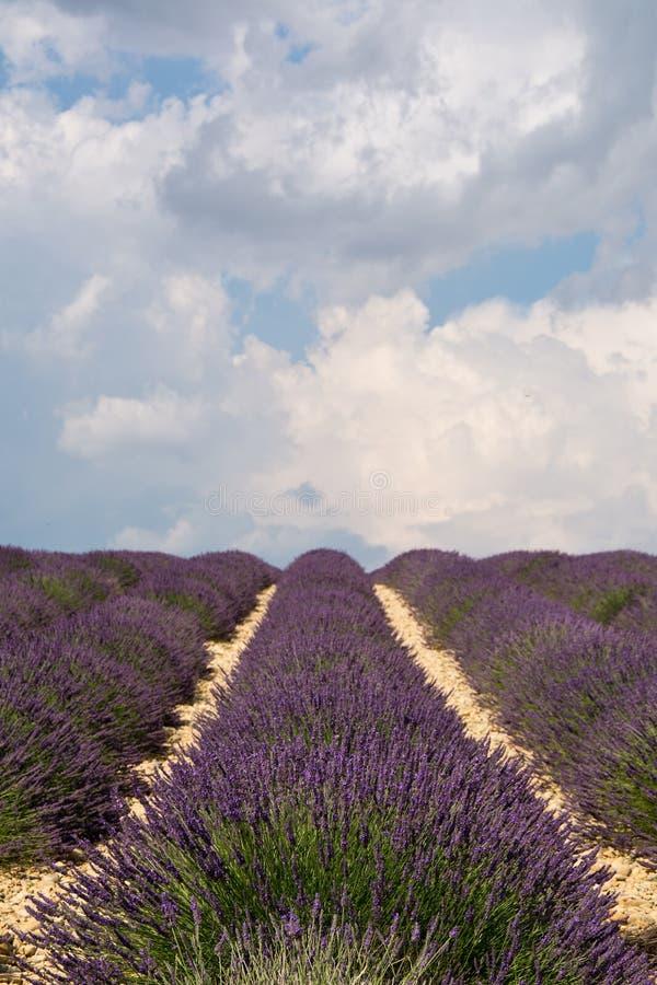 Lavendelgebied in plateau DE Valensole, Frankrijk royalty-vrije stock foto's