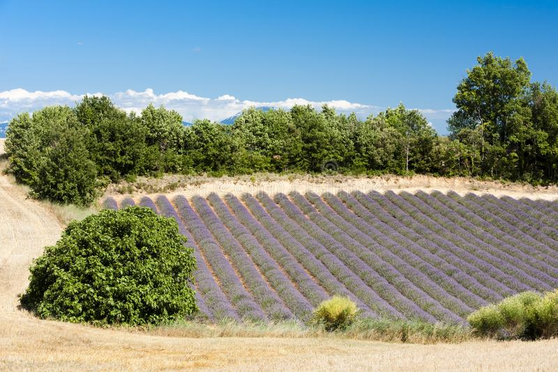 Lavendelgebied, Plateau DE Valensole, de Provence, Frankrijk royalty-vrije stock afbeelding