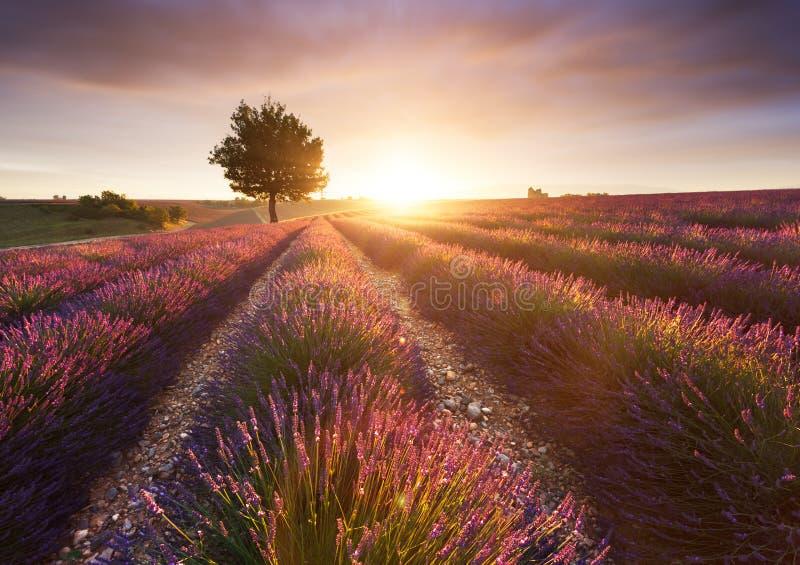 Lavendelgebied in Valensole royalty-vrije stock afbeeldingen