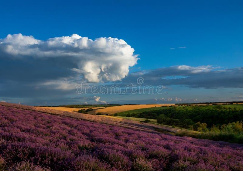 Lavendelgebieden stock foto's