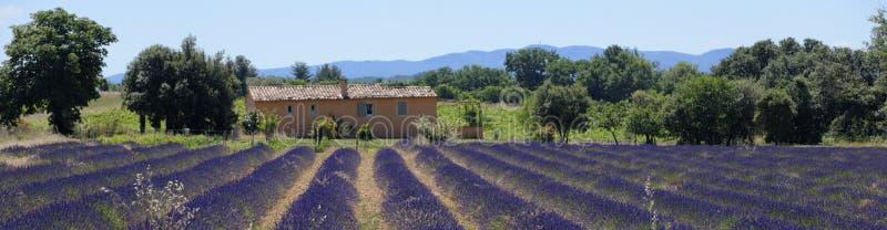 Lavendelgebieden in de Provence royalty-vrije stock afbeeldingen