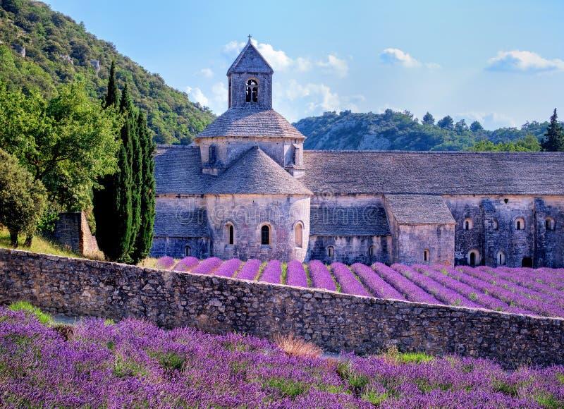 Lavendelgebieden, de Provence, Frankrijk stock afbeelding