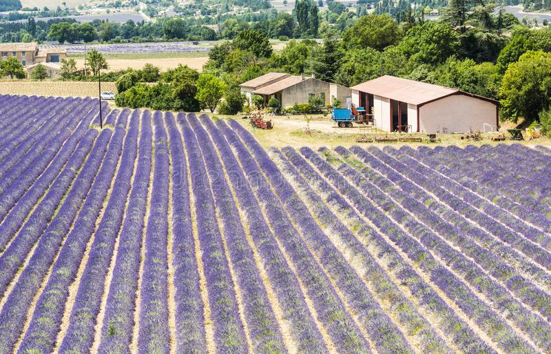 Lavendelgebieden in de Provence stock fotografie