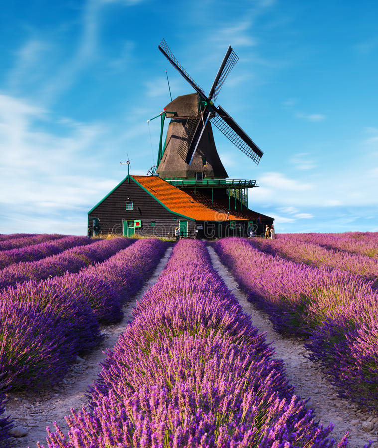 Lavendelgebieden met windmolen stock foto's