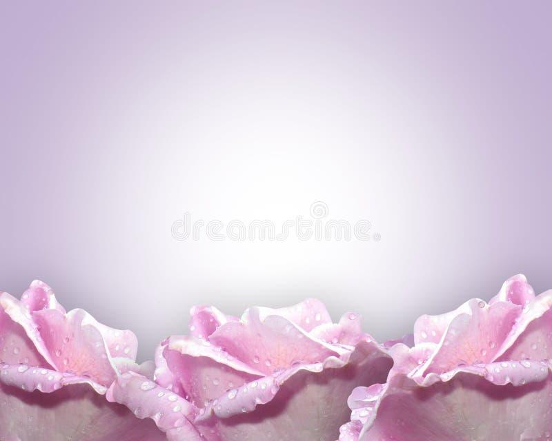Lavendelrosen lizenzfreie abbildung