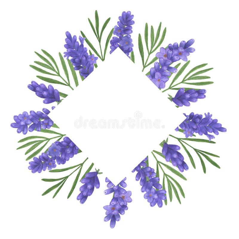 Lavendelvattenfärgbuketten av uppsättningen för den Provence blommaillustrationen av botaniska garneringar för sommar planlägger  royaltyfri illustrationer