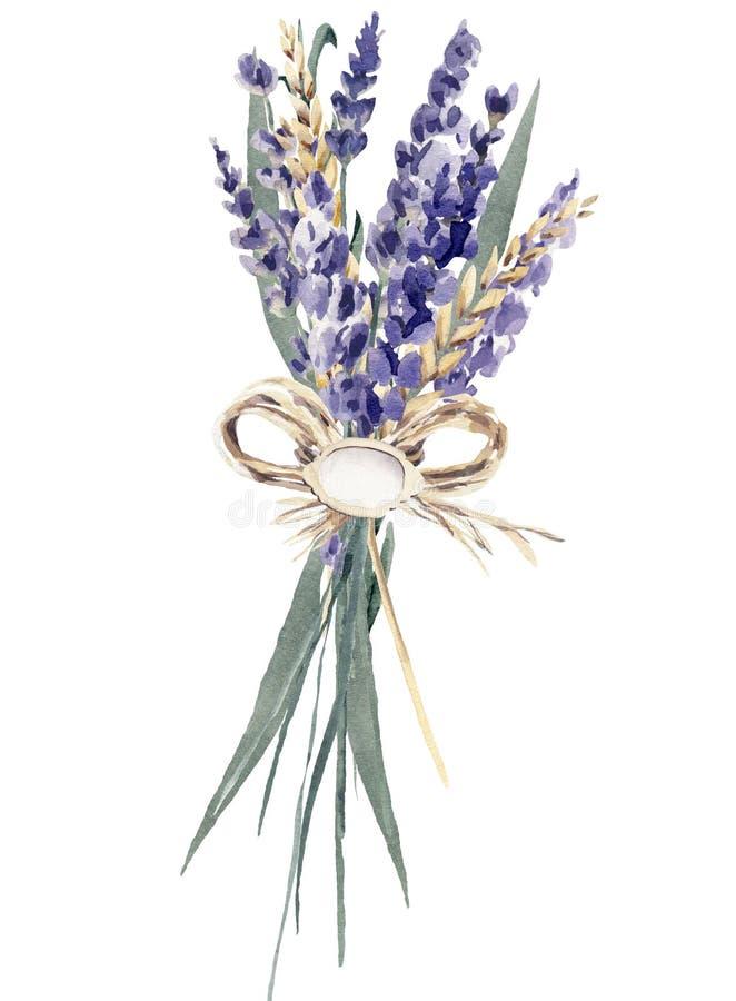 Lavendelvattenfärghanden målade sädes- vete provence för buketten royaltyfri illustrationer