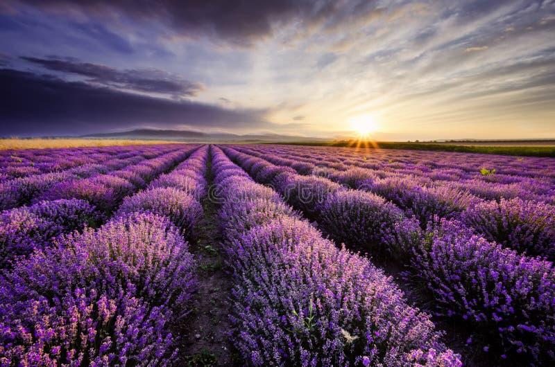 Lavendelzonsopgang royalty-vrije stock fotografie