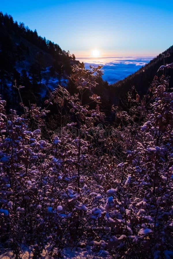 Lavender επάνω σε ένα βουνό στην ανατολή στοκ φωτογραφίες με δικαίωμα ελεύθερης χρήσης