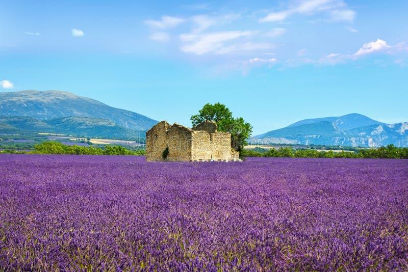 Lavender ανθίζει τον ανθίζοντας τομέα, το παλαιά σπίτι και το δέντρο Προβηγκία, Φ στοκ φωτογραφία με δικαίωμα ελεύθερης χρήσης