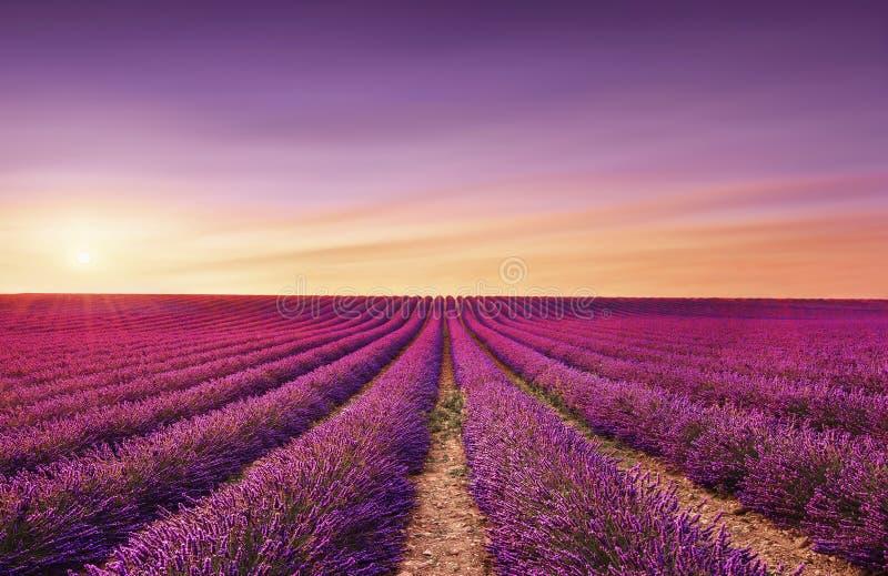 Lavender ανθίζει τους ανθίζοντας τομείς στο ηλιοβασίλεμα Valensole, Προβηγκία, Γαλλία στοκ εικόνες