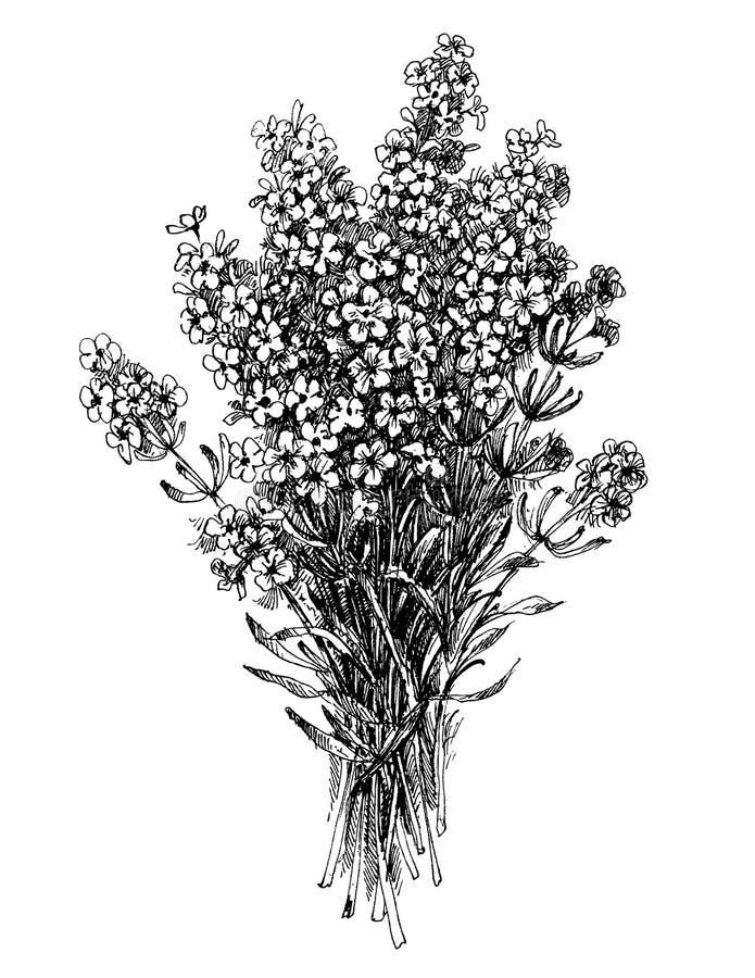 Lavender ανθοδέσμη λουλουδιών απεικόνιση αποθεμάτων