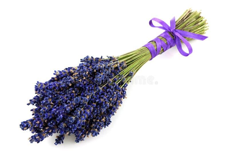 Lavender ανθοδέσμη που απομονώνεται στοκ φωτογραφίες