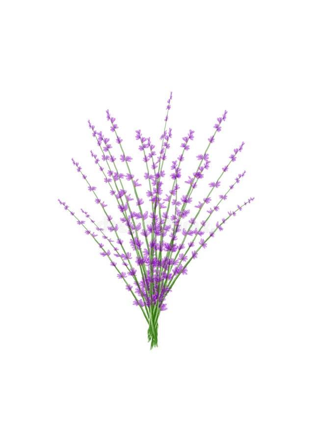 Lavender απεικόνιση Watercolor δεσμών στοκ φωτογραφία