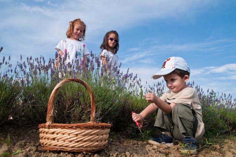 Lavender επιλογής Childer στοκ φωτογραφίες με δικαίωμα ελεύθερης χρήσης
