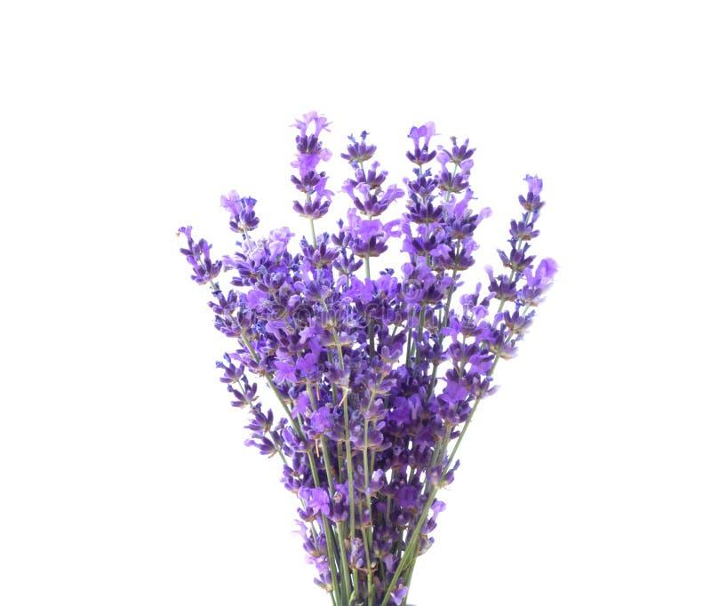 lavender δεσμών στοκ εικόνα με δικαίωμα ελεύθερης χρήσης