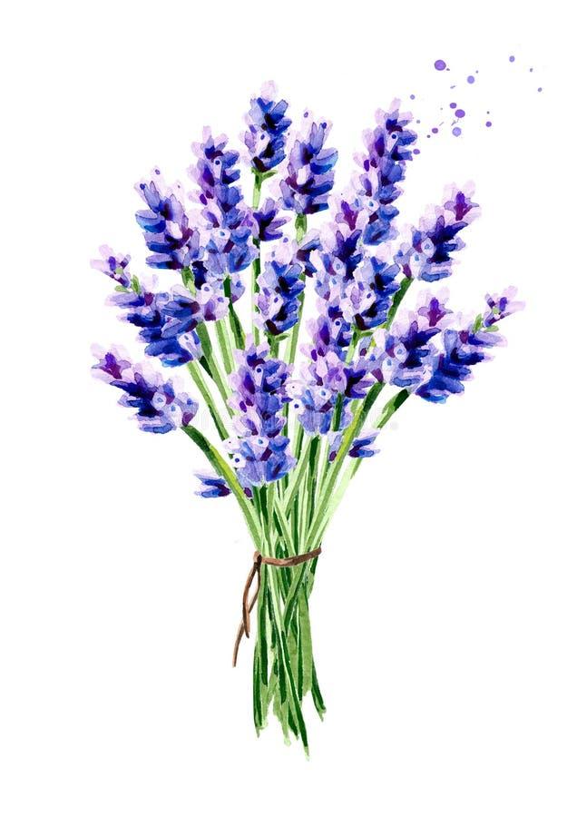 Lavender θερινή ανθοδέσμη Συρμένη χέρι κάθετη απεικόνιση Watercolor, που απομονώνεται στο άσπρο υπόβαθρο στοκ φωτογραφίες