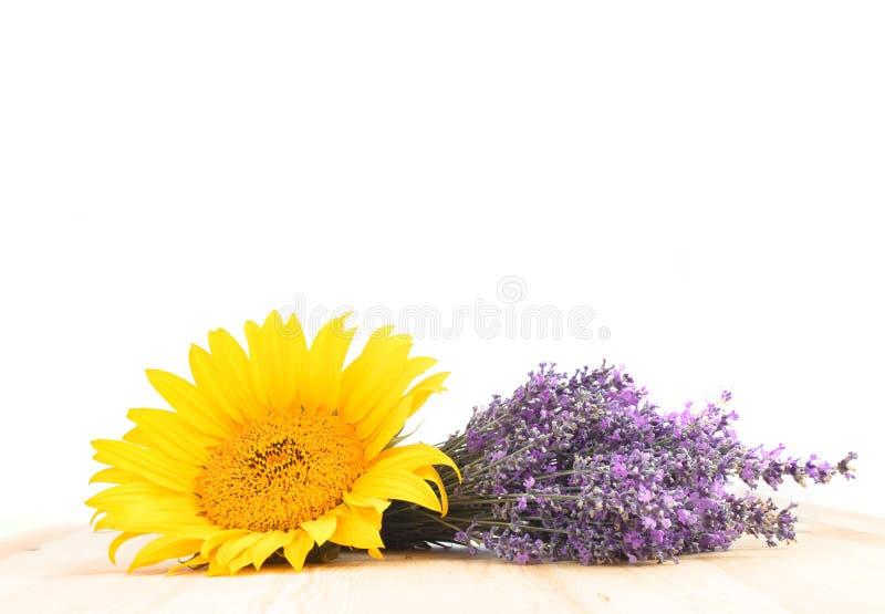 Lavender και ηλίανθος στοκ εικόνες