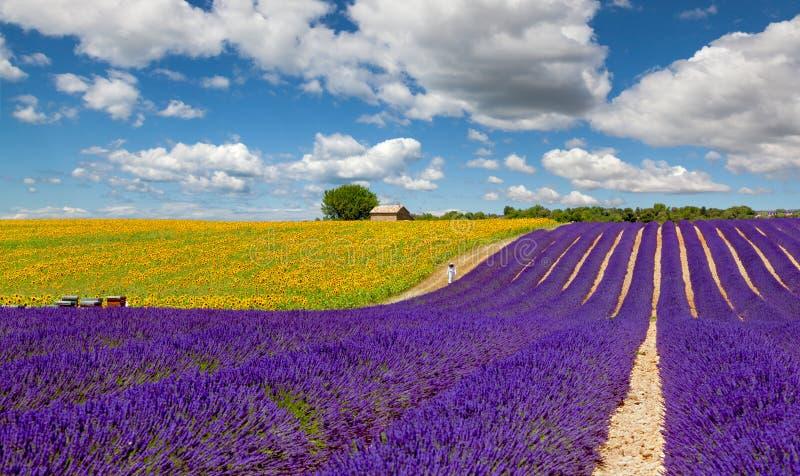 Lavender και ηλίανθων τομέας σε Valensole στοκ φωτογραφίες