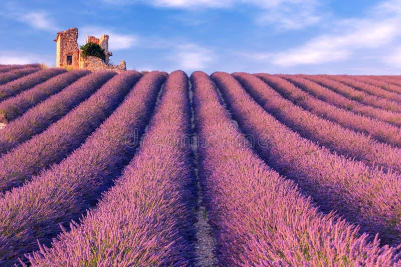 Lavender καλοκαίρι τομέων κοντά σε Valensole στοκ εικόνα