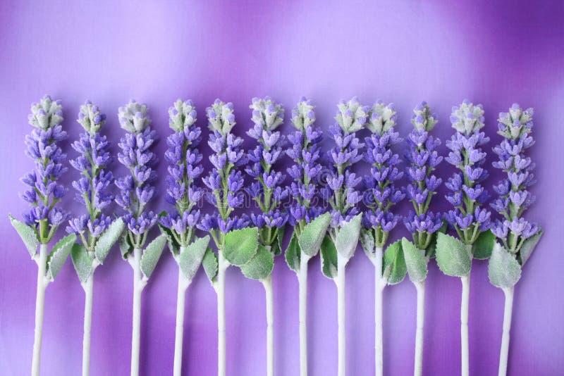 lavender σειρά αναμονής στοκ φωτογραφία με δικαίωμα ελεύθερης χρήσης