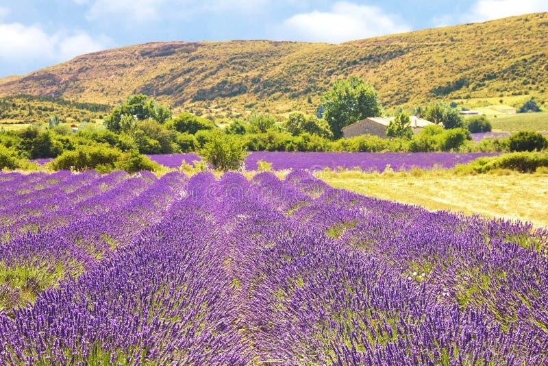 Lavender στην Προβηγκία στοκ φωτογραφία με δικαίωμα ελεύθερης χρήσης
