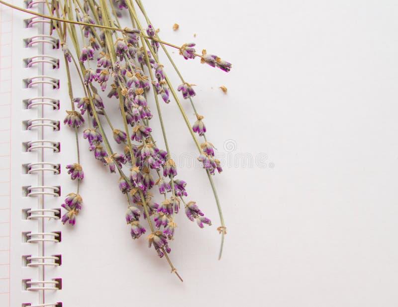 Lavender τα λουλούδια που βρίσκονται σε ένα ανοικτό σημειωματάριο, ΕΠΙΠΕΔΟ ΕΝΝΟΙΑΣ ΒΑΖΟΥΝ, ΤΟΠ κινηματογράφηση σε πρώτο πλάνο ΑΠΟ στοκ εικόνα