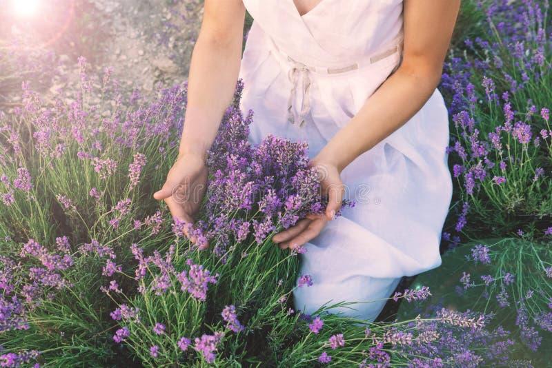 Lavender τομέας και θηλυκά χέρια στοκ εικόνες με δικαίωμα ελεύθερης χρήσης