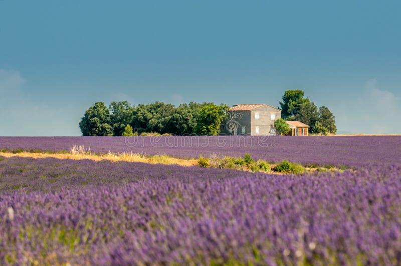 Lavender τομέας, Προβηγκία, Γαλλία στοκ φωτογραφία
