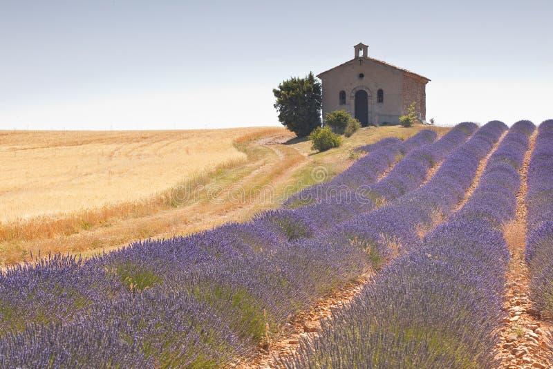 Lavender τομέας στοκ φωτογραφία με δικαίωμα ελεύθερης χρήσης