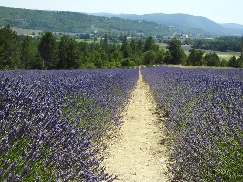 Lavender τομείς και βουνά στοκ φωτογραφία με δικαίωμα ελεύθερης χρήσης