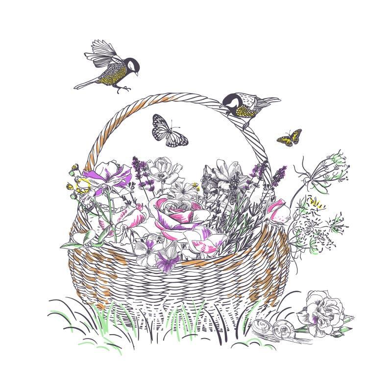 Lavender τριαντάφυλλων καλαθιών το διάνυσμα λουλουδιών χαράσσει την κάρτα ελεύθερη απεικόνιση δικαιώματος