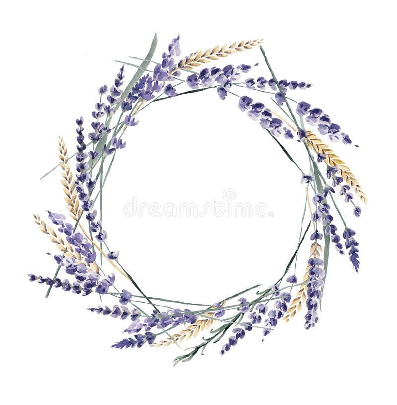 Lavender χρωματισμένα δημητριακά Προβηγκία σίτου στεφανιών watercolor χέρι ελεύθερη απεικόνιση δικαιώματος