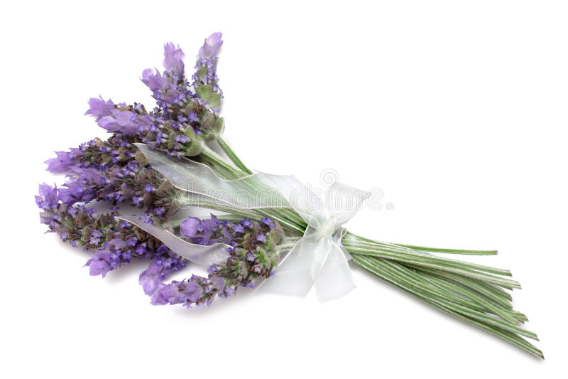 Download Lavender stock image. Image of relax, perfume, clipping - 12721239