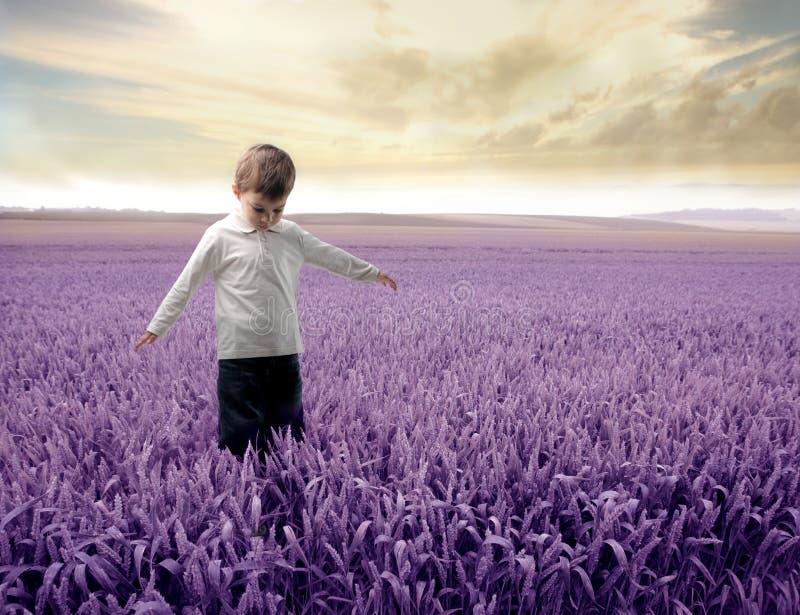 Download Lavender stock image. Image of child, travel, field, lavender - 13872679