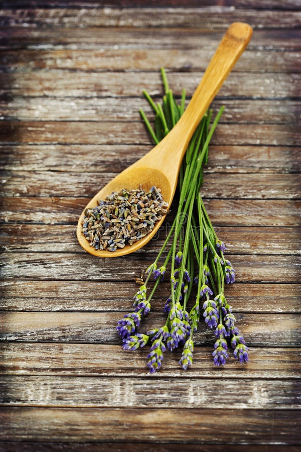 Lavender. Fresh and dried lavender on a wooden surface royalty free stock photo
