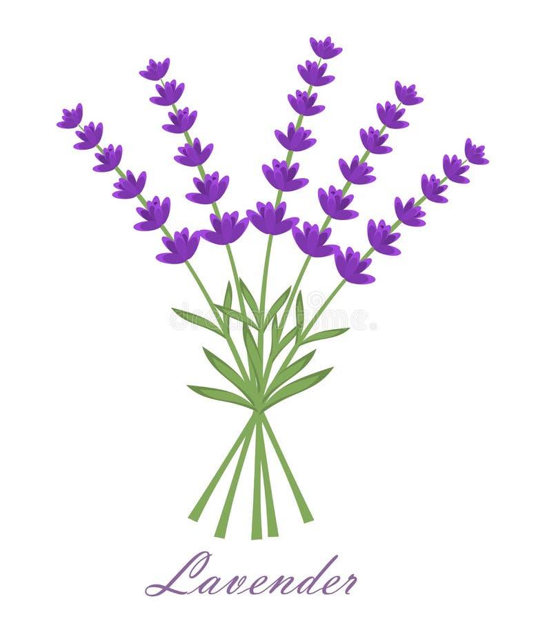 Download Lavender stock vector. Image of herb, background, flower - 26101644
