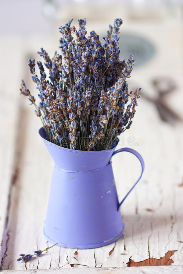 Lavender. στοκ εικόνες