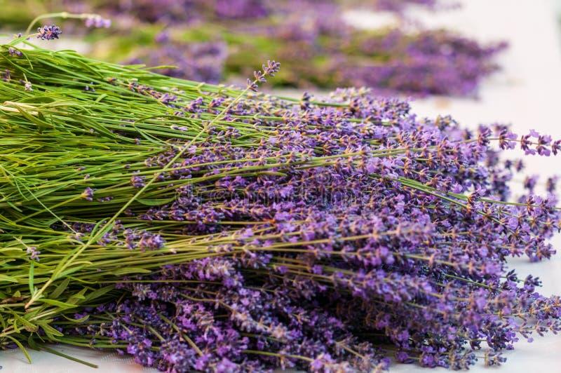 Lavender angustifolia, lavandula in herb garden harvest cuted stock images