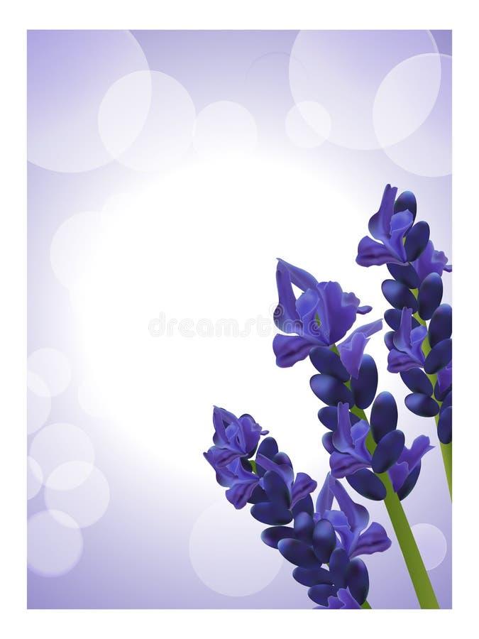 Lavender Background 2 Stock Photo