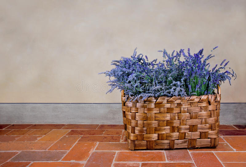 Lavender in a basket stock images