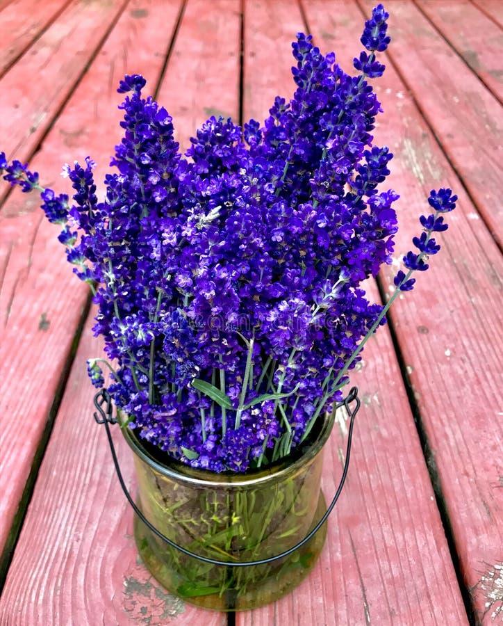 Free Lavender Bouquet Again Wood Backdrop Stock Images - 113337464