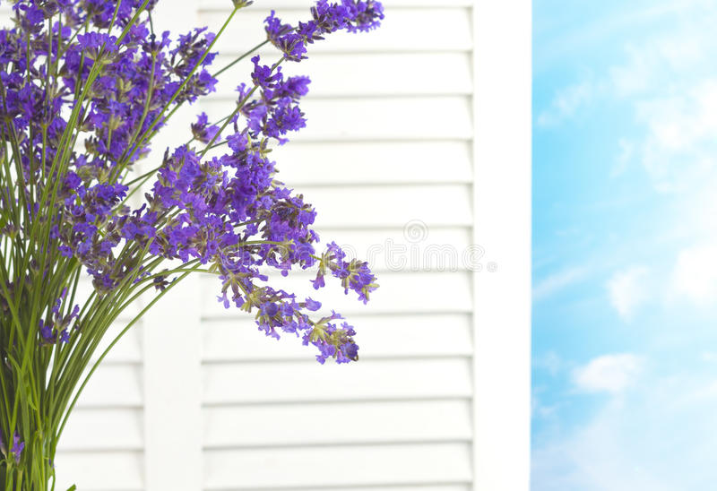 Lavender Bouquet Against White Window Shutters looking out at a Fresh Day with Sky and Clouds on a Pretty Day stock photography
