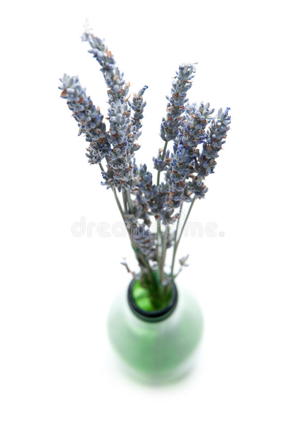 Lavender. Bouquet in a bottle isolated on white royalty free stock image
